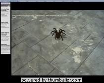 nooit meer bang voor spinnen?
