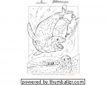 National Geographic Coloring Book: Leopard Seals Picture